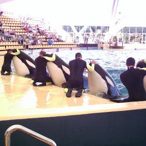 Orcas Loro Parque