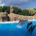 Delfines Loro Parque